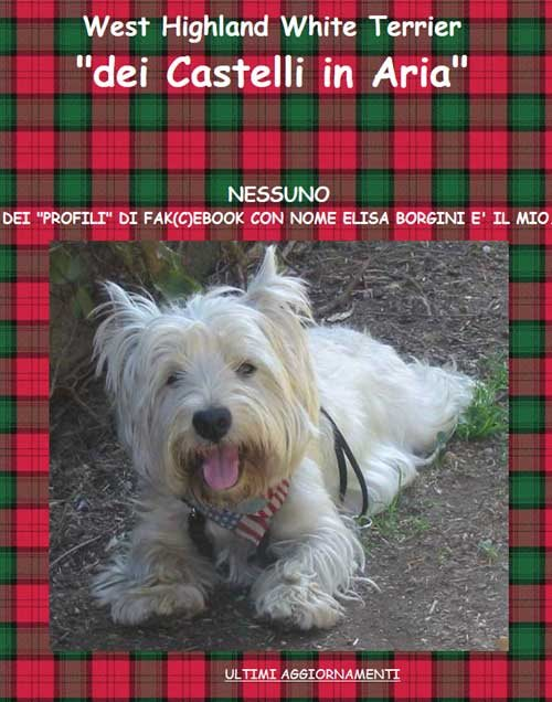 I cani West Highland White Terrier dei Castelli in Aria